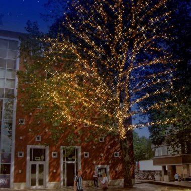 Bomen Marienburg 2019 (1)